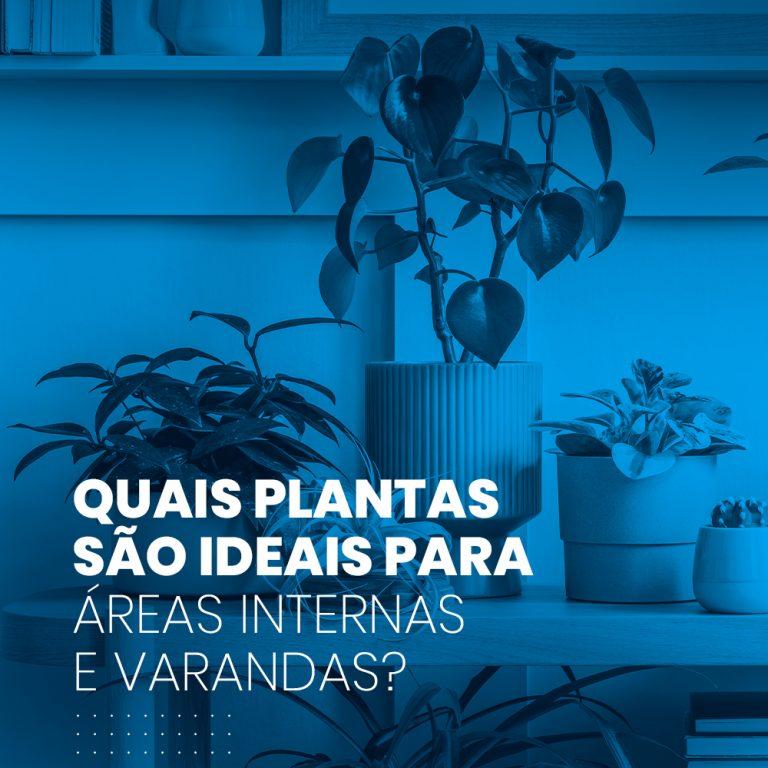 Quais plantas são ideais para áreas internas e varandas?